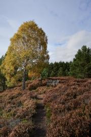 20171019_Scotland_0370_1200