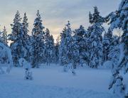 20200204_Finland_0849